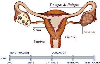 Cambio de estilo en la ¿anticoncepción?